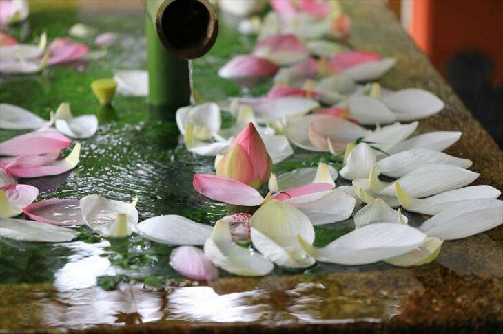 鶴岡八幡宮 蓮の花手水