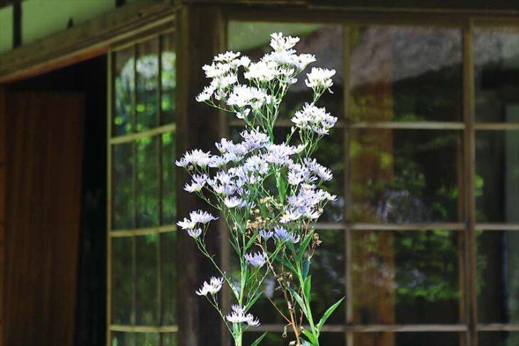 浄智寺 書院の庭の花