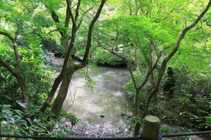 妙本寺の池